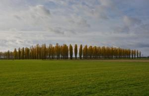 Expositie Verrassend Brabant